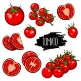 Tomater ställde in samlingen Royaltyfria Bilder