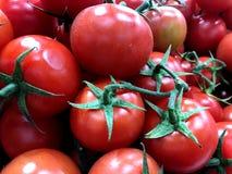 Tomater Till salu i marknaden royaltyfri foto