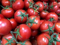 Tomater Till salu i marknaden royaltyfria bilder
