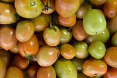 Tomater vissnade inte nytt Royaltyfria Bilder