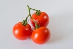 Tomaterna Royaltyfri Foto