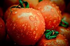 Tomates úmidos em uma pilha fotografia de stock