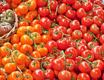 Tomates Foto de Stock