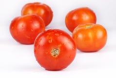 Tomates Images libres de droits