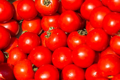Tomates Imagen de archivo