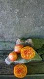 Tomates 60 Imagens de Stock
