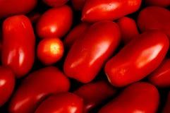Tomates Foto de Stock Royalty Free