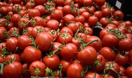 Tomates Fotos de Stock