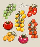 Tomates ajustados do desenho da mão do vetor Imagens de Stock Royalty Free