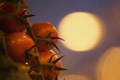Tomates alaranjados sob a luz artificial do crescimento Fotografia de Stock Royalty Free