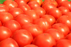 Tomates alignées en vente Images stock
