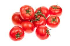 Tomates amadurecidos videira Fotos de Stock Royalty Free