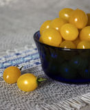 Tomates amarelos Imagens de Stock