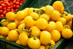 Tomates amarelos Imagem de Stock