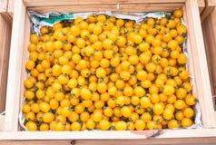 Tomates amarillos Fotografía de archivo libre de regalías