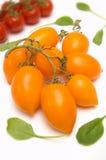 Tomates amarillos de Roma en vid Fotos de archivo
