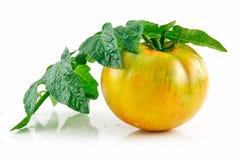 Tomates amarillos mojados maduros con las hojas aisladas Fotografía de archivo