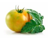 Tomates amarillos mojados maduros con las hojas aisladas Foto de archivo libre de regalías