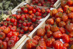 Tomates au marché Photos libres de droits