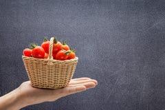 Tomates avec des gouttes de l'eau dans un panier Photographie stock libre de droits