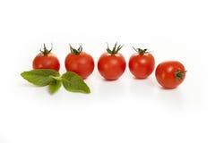 Tomates avec la menthe sur un fond blanc Image libre de droits