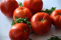 Tomates avec le persil Photographie stock
