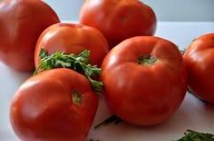 Tomates avec le persil Images stock