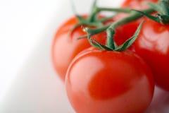 Tomates brilhantes do isolado sobre o branco Fotografia de Stock Royalty Free