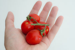 Tomates-cerises Photo stock