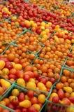 Tomates-cerises de panier Photo libre de droits