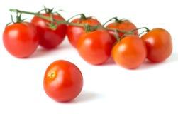 Tomates-cerises fraîches mûres sur le branchement Images libres de droits