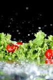 Tomates-cerises mûres fraîches avec des baisses de laitue et de l'eau d'isolement sur le noir, concept de légumes de récolte Image libre de droits