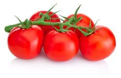 Tomates-cerises mûres sur la branche d'isolement sur le fond blanc Image libre de droits