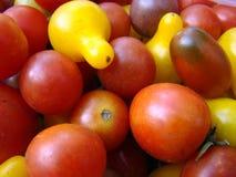 Tomates-cerises multicolores Photos libres de droits