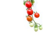 tomates-cerises organiques, d'isolement sur le fond blanc image stock