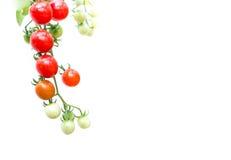 tomates-cerises organiques, d'isolement sur le fond blanc images stock