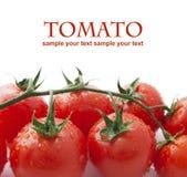 Tomates-cerises sur le blanc Image libre de droits