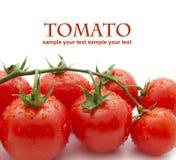 Tomates-cerises sur le blanc Photos libres de droits
