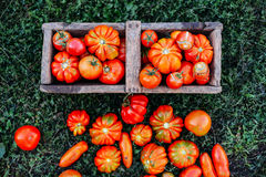 Tomates clasificados en bolsas de papel marrones Diversos tomates en cuenco imagen de archivo libre de regalías