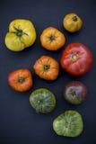 Tomates colorées Images stock