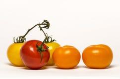 Tomates colorées Photos stock