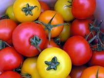 Tomates coloreados Imagen de archivo libre de regalías