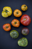 Tomates coloridos Imagens de Stock
