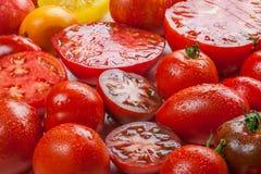 Tomates coloridos Imagens de Stock Royalty Free