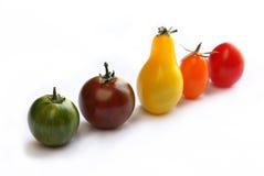 Tomates coloridos isolados que estão na linha Imagem de Stock Royalty Free