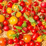 Tomates coloridos sortidos Fotografia de Stock Royalty Free