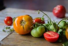 Tomates coloridos, tomates rojos, tomates amarillos, tomates anaranjados, tomates verdes Fondo de madera del vintage Imagen de archivo