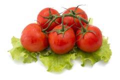 Tomates com a alface isolada no fundo branco Fotografia de Stock