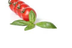 Tomates com folha da manjericão imagem de stock royalty free