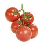 Tomates com gotas da água em um branco Fotos de Stock Royalty Free
